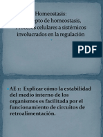 Homeostasis Clase 1 (1)