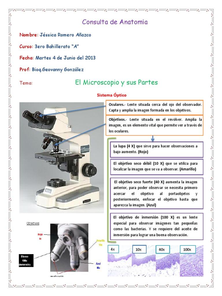Dorable Anatomía Del Microscopio Galería - Anatomía de Las ...