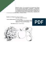 Ffrutasyhortalizas 090718084823 Phpapp01 (1)