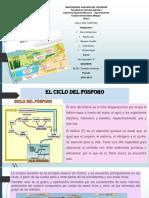 Ciclo Del Fosforo y Azufre