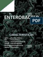 Enterobacter (genero)