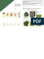 CLASIFICAR PLANTAS.docx