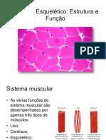 Aula - 1 - Músculo Esquelético Estrutura e Função