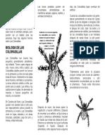 Chiggers - Information (Spanish) 01-19-2011 014034