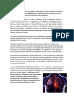 Sistema Circulatori2
