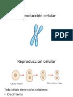 12. Reproducción Celular