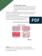 Estructuras_del_cuerpo_humano.pdf