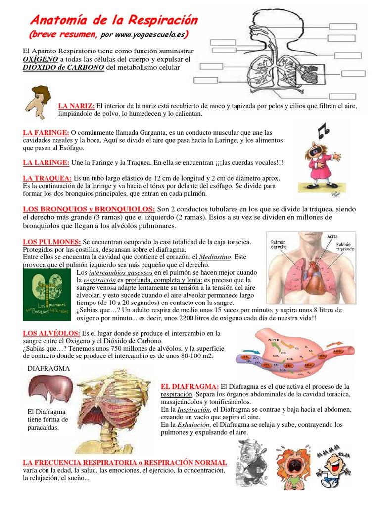 Bonito Anatomía Garganta El Esófago Ideas - Imágenes de Anatomía ...