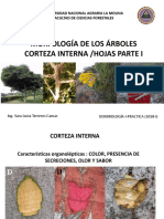 Morfología de los Árboles Corteza Interna y Hojas