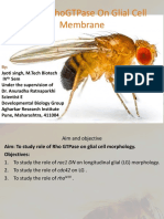 Research Presentation on Drosophila melanogaster glial cell
