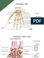 Osteologia - Mão