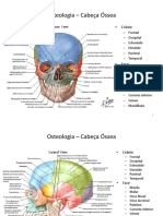 Osteologia – Cabeça Óssea