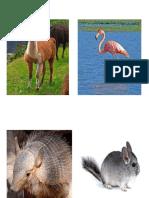 ANIMALITOS JUNIO.docx