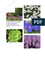 Plantas Silvestres.docx