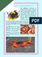 Fichas Animales Invertebrados