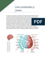 Hemisferios Cerebrales y Sus Funciones