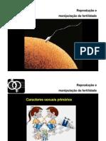 ppt1-SRMasculino
