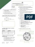 evaluacion biologia 4° ( 2 bim)