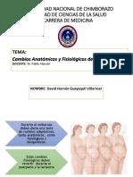 David Guayaquil Cambios Fisiològicos y Anatómicos Del Embarazo
