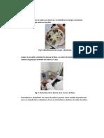 Microbilogia Del Suelo (1)