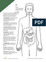 Laiza Digestive System