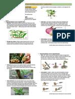 reproduksi vegetatif angiospermae