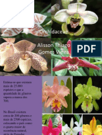 Orchidaceae Alisson Thiago