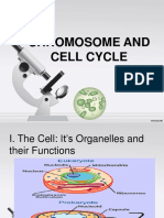 Chromosome and Cell Cycle