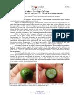 Frutos e Grãos de Café Triangulo – Quase Desconhecidos Da Ciência
