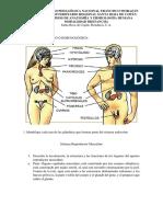 Guia de Anatomia