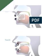 Articulatory Anatomy