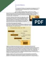 238751090-Teoria-de-La-Transposicion-Didactica.docx