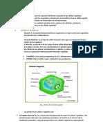 Informe de Celula Vegetal