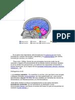 Sistema nervioso resumen.pdf