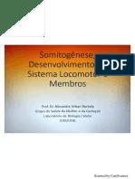 Somitogênese, Sistema Locomotor e Membros