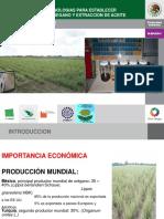 2.TECNICAS_Y_TECNOLOGIAS_PARA_ESTABLECER_PLANTACIONES_DE_OREGANO_Y_EXTRACCION_DE_ACEITE_-_COPIA.pdf