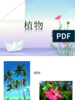 植物.pptx