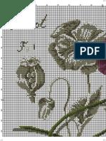 Amapola o Pavot 2671 Dfea Flower Sha