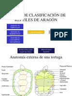 CLAVES DE CLASIFICACIÓN DE REPTILES DE ARAGÓN