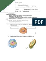 Evaluación de Cs Naturales CELULA 2018.docx