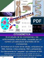 Elemento Extra Cromosómicos