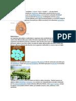 Eucariotas.docx