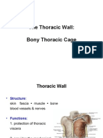 Anatomy, Lecture 3,  Thoracic Wall (1)  [Slides]