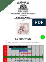 FISIOLOGIA MASCULINA.ppt
