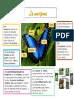 Infografia Camila Silva