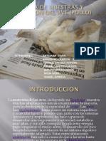 Toma de Muestras y Diseccion Del Ave (