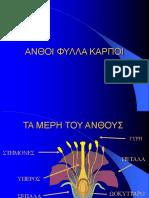 ΑΝΘΗ-ΦΥΛΛΑ-ΚΑΡΠΟΙ