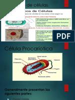 Los tipos de células, exposicion de biologia basica.pptx