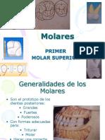 286558842 1er Molar Superior Ppt