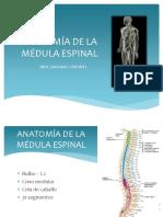 Anatomía de La Médula Espinal